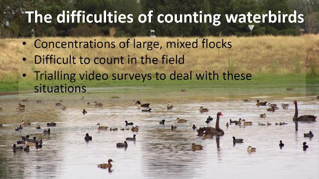 Learn how the NSW Department of Primary Industries surveys waterbirds to establish population estimates in the Riverina region of New South Wales, Australia.