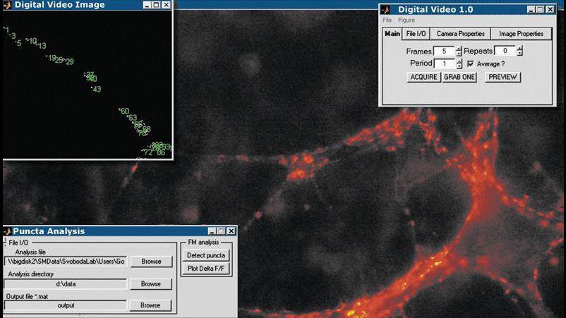 Applicazione Image Acquisition Toolbox che acquisisce e analizza le immagini di sinapsi centrali per monitorare la trasmissione sinaptica nel tempo.