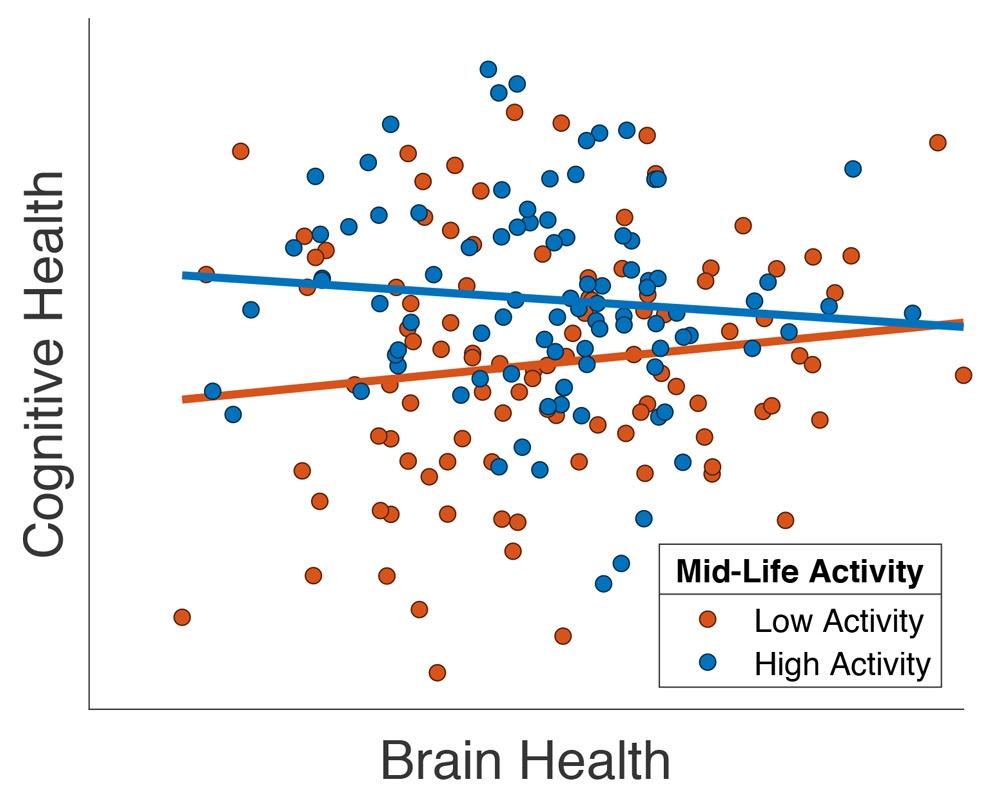 """Il grafico mostra la relazione tra l'abilità cognitiva e una misura MRI strutturale della salute cerebrale (""""volume totale della materia grigia"""") in un sottogruppo di partecipanti Cam-CAN di oltre 65 anni di età, adattamento da Chan et al. (2018). Ogni partecipante è rappresentato da un puntino, mentre il colore indica se ha praticato un livello elevato (blu) o basso (rosso) di attività fisica al di fuori del posto di lavoro in età matura."""