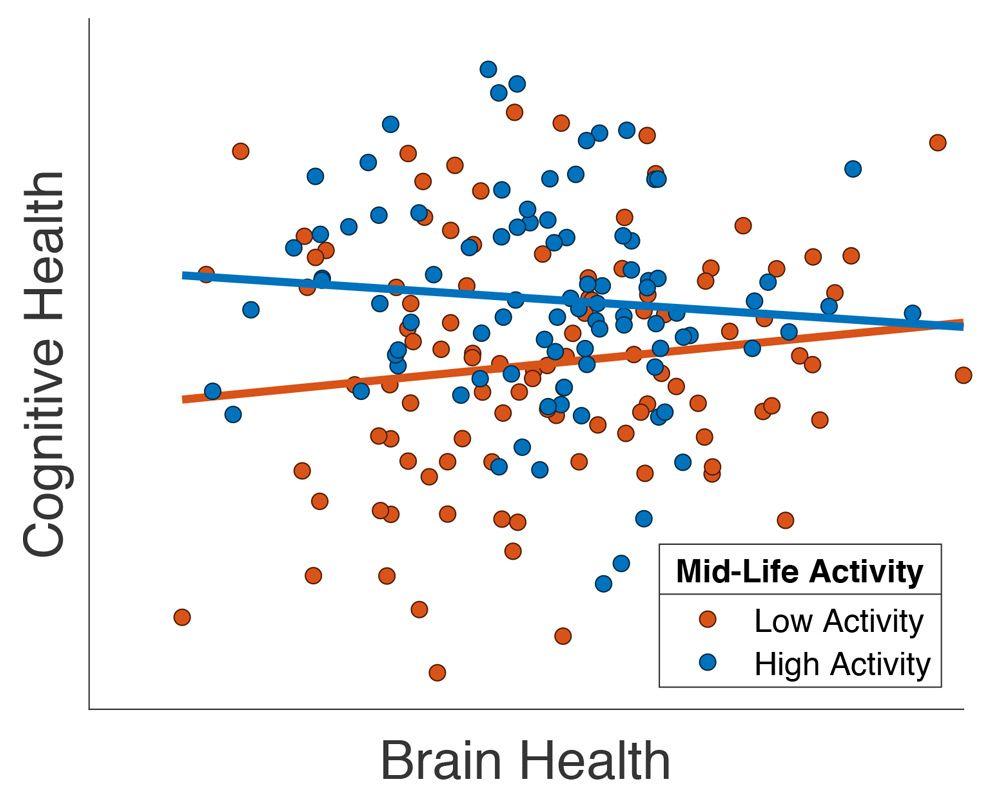 Grafico che mostra il miglioramento della salute cerebrale di pazienti anziani con alti livelli di attività sociale in età media