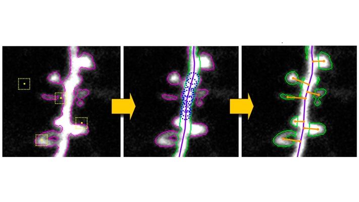 Il deep learning è in grado di decifrare il linguaggio dei topi