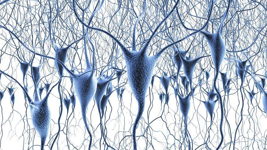 Neuroscienza cellulare e dei sistemi